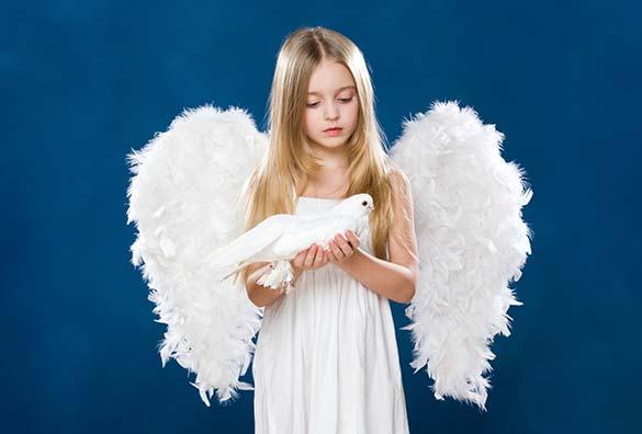 white color dove
