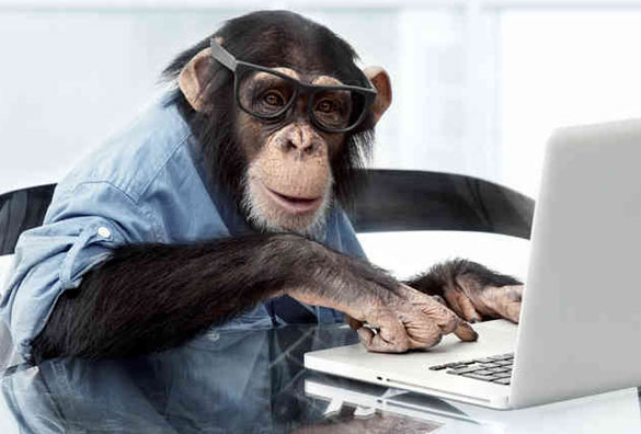 graphic design monkey